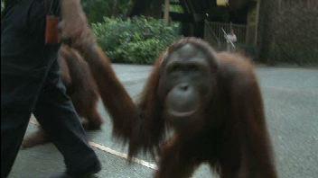 Le zoo de Singapour
