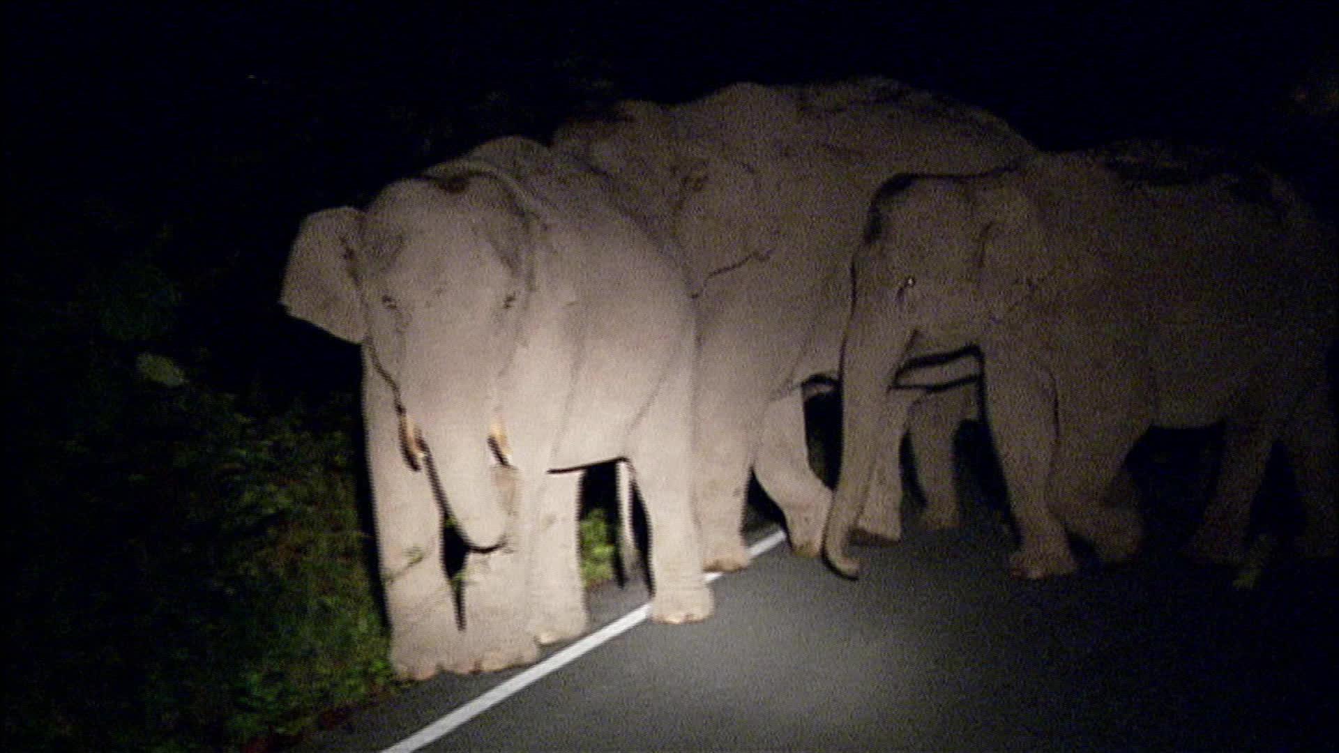 Les éléphants - Thaïlande