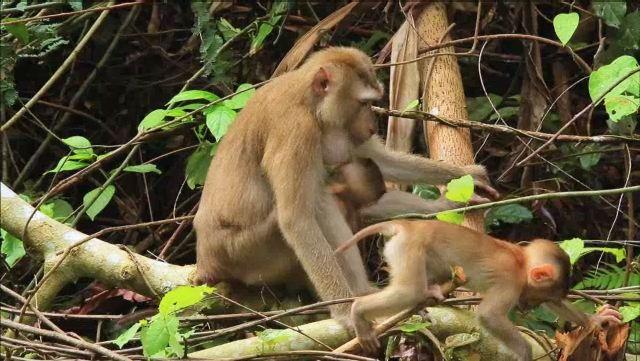 Parc national de Khao Yai (Thaïlande)