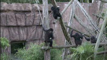 Le zoo d'Edimbourg