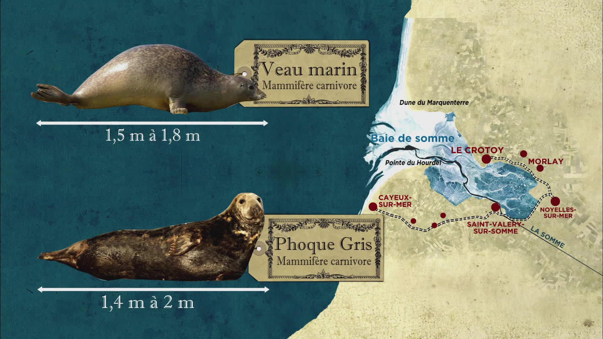 Sur les traces des phoques dans la baie de Somme