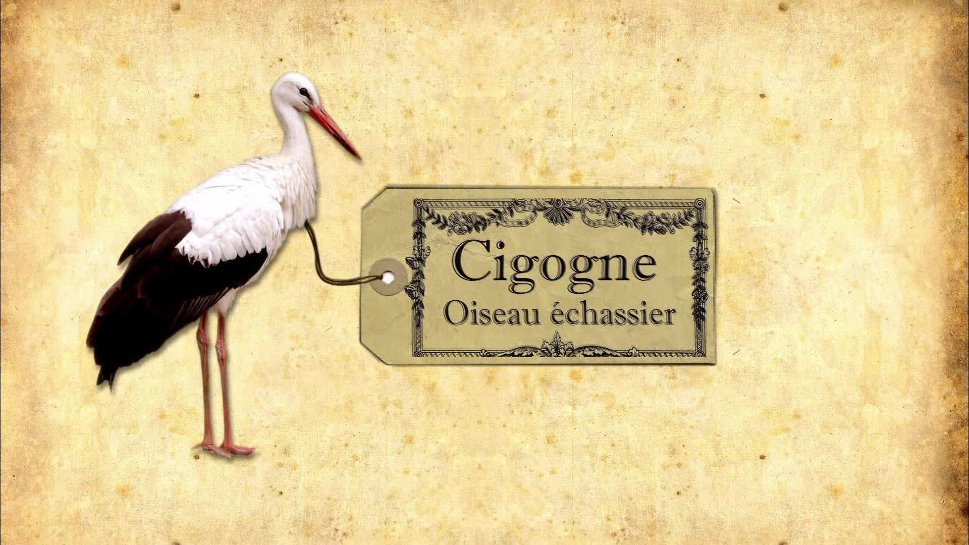 Sur les traces des cigognes en Alsace