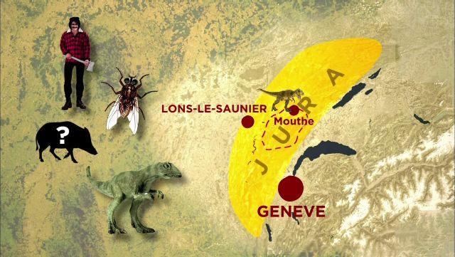 Sur les traces des dinosaures dans le massif du Jura