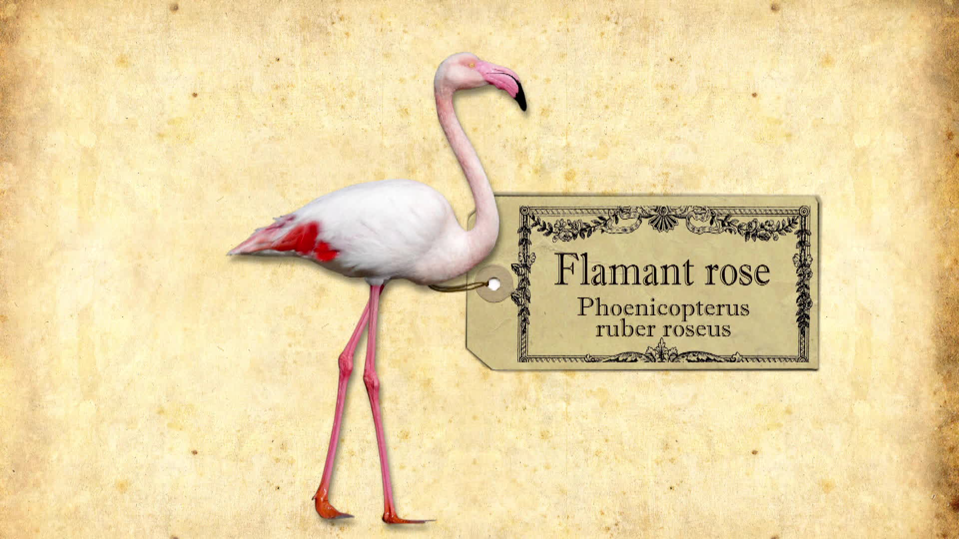 Sur les traces des flamants roses en Camargue