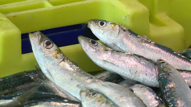 La sardine de bolinche