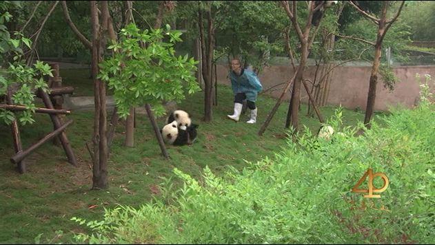 Li Han, soigneur à la base de recherche sur la reproduction des pandas de Chengdu