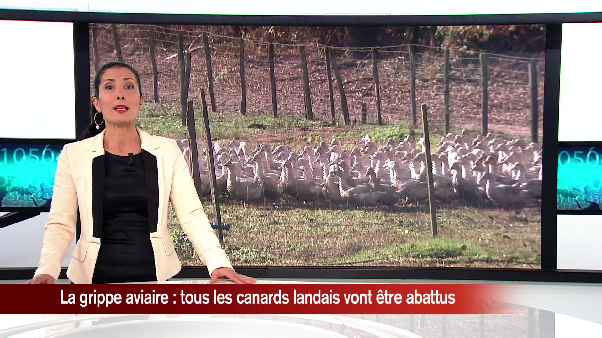 Canards d'élevage abattus dans les Landes / Déclin des multinationales